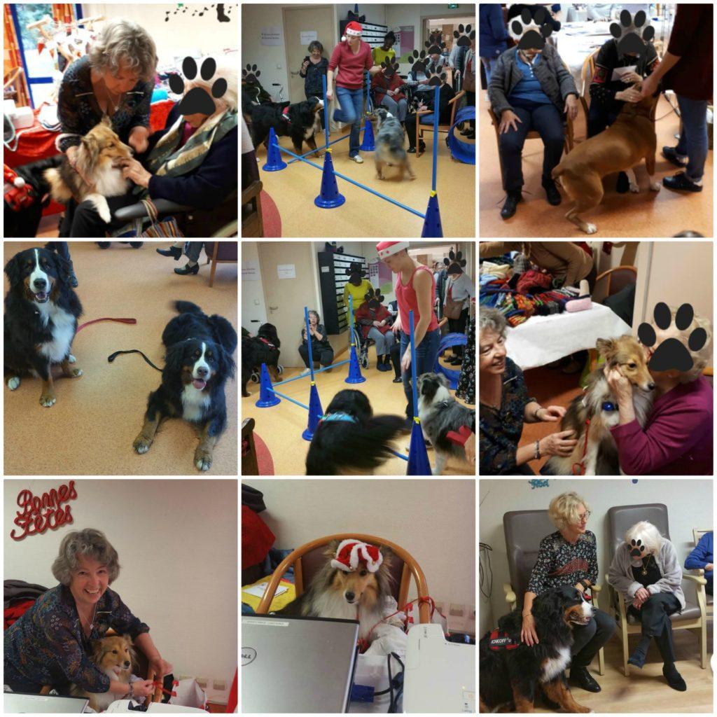 Chiens visiteurs en action à la résidence Edilys. Dévouement et patience des chiens très conscients de leur rôle.