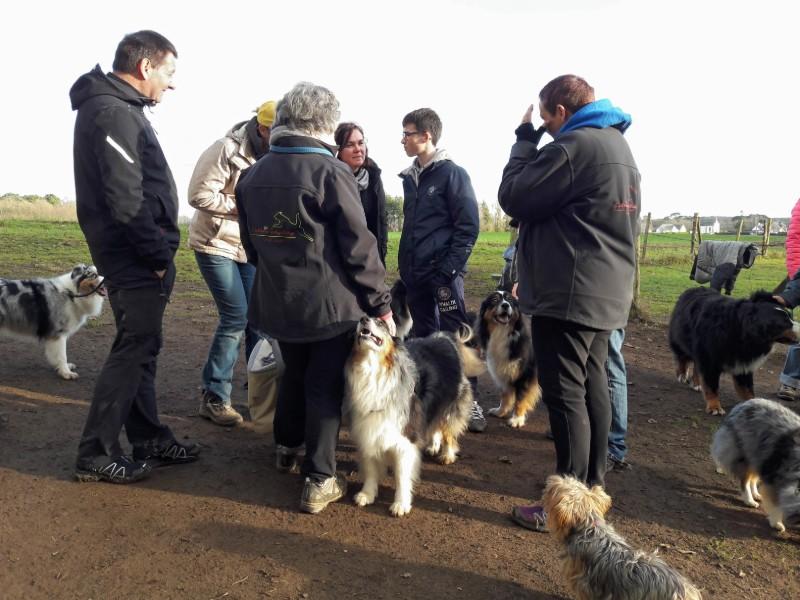 Au Celtic'Agility, les chiens sont lâchés avant et après la séance de travail pour faciliter la sociabilisation
